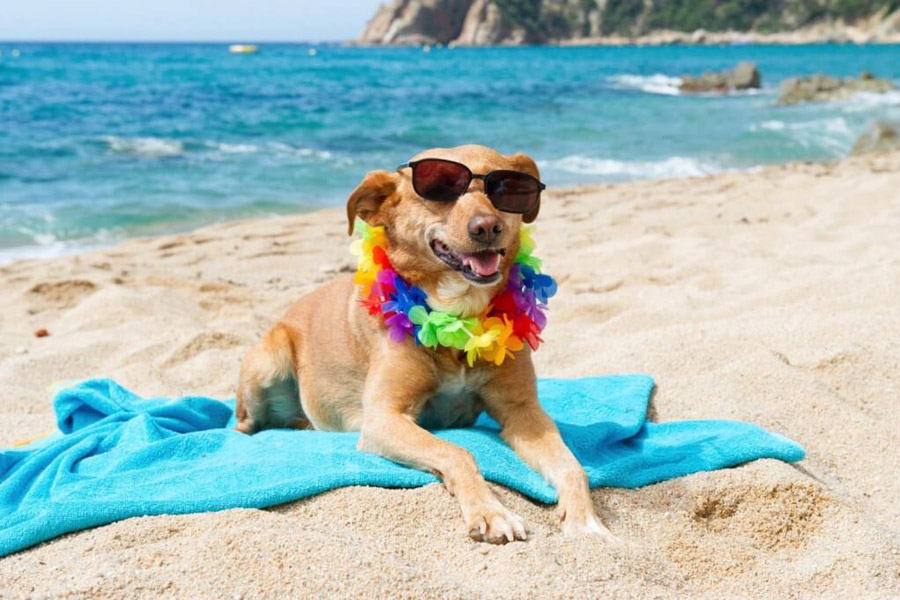 Fun Things For Dogs To Do In The Summer