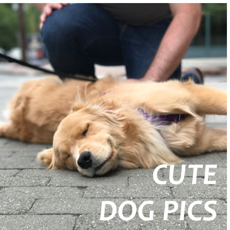 Pics Of Jersey City Hoboken Dogs
