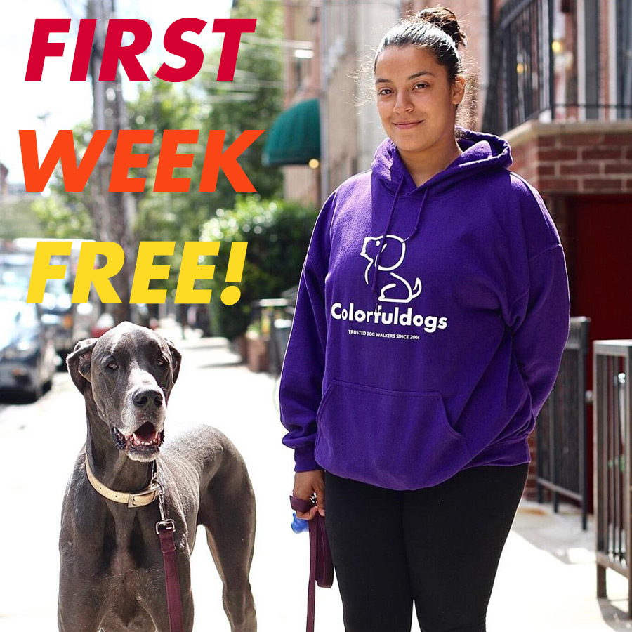 First Week Free Dog Walking
