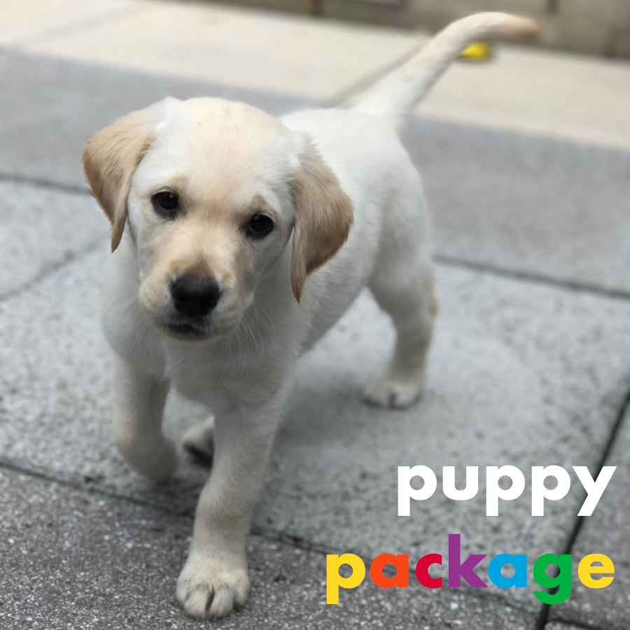 Puppy Package from Colorfuldogs