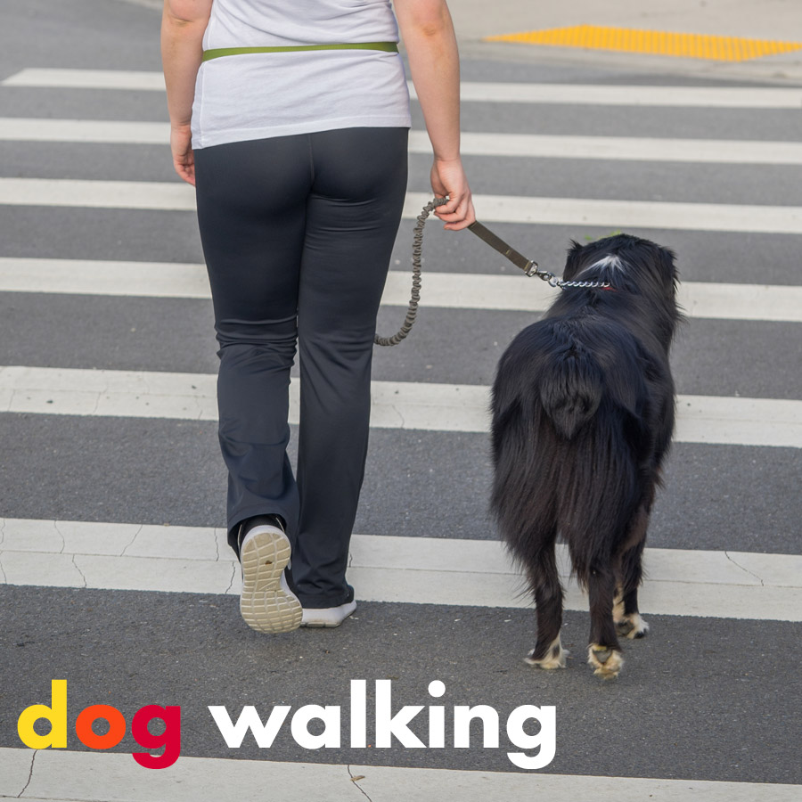 Dog Walking From Colorfuldogs